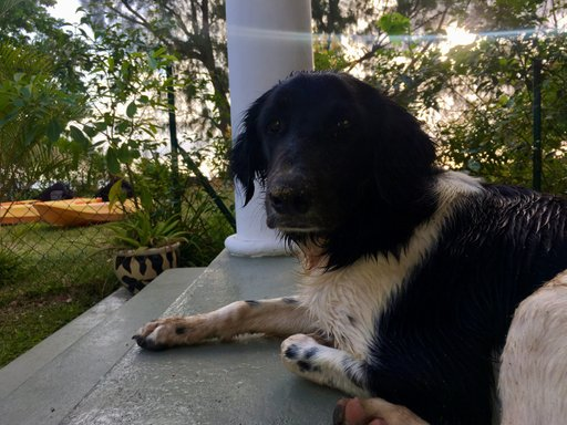 The dog who lived at our B&B