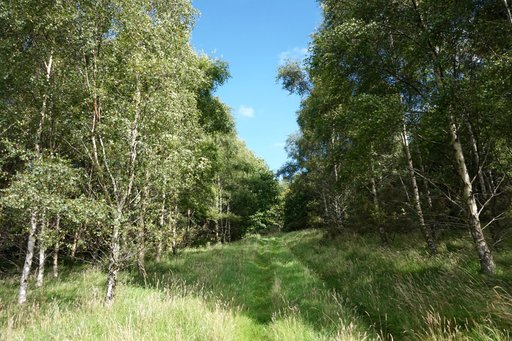 A trail through a forest just outside the village of Nigg