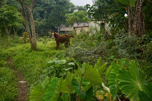 A horse in a village